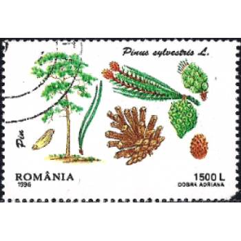 ROM Selo, 1996, (Mint), Yt:RO 4346, Trees - Conifers, Scots Pine (Pinus sylvestris).